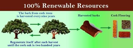 sustainable resources material to build with cork